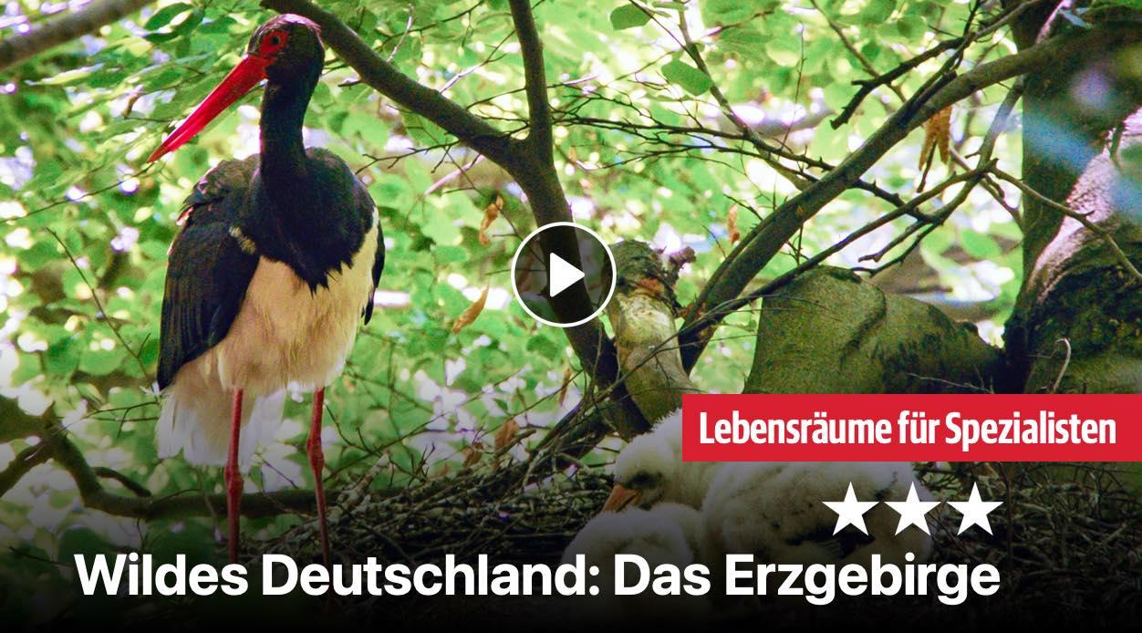 Wildes Deutschland: Das Erzgebirge