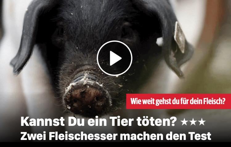 Kannst Du ein Tier töten?