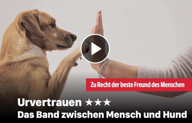 Das Band zwischen Mensch und Hund